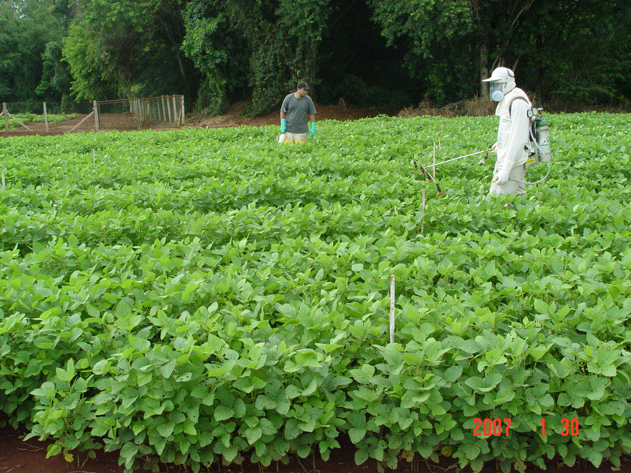 Project Updates - Soy Bean Rust Project - PSS - UK