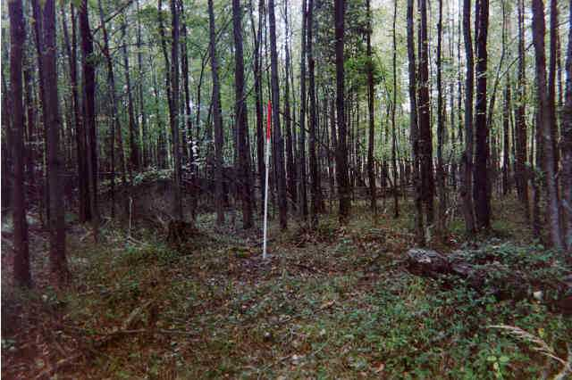 (Photograph of a typical bottomland hardwood forest wetland that dominated