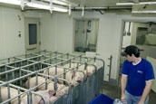 Gestation Area Picture - {Click to Enlarge}