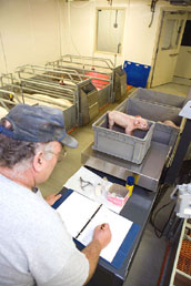 Farrowing Picture - {Click to Enlarge}
