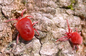 Mites & Ticks of Kentucky - University of Kentucky Entomology