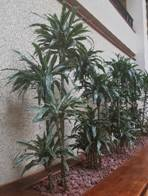 Interior Plantscape Pest Control - Kentucky Pesticide Safety