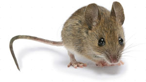 Rodent Control - Kentucky Pesticide Safety Education