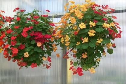 http://www.uky.edu/Ag/Horticulture/gardenflowers/tatz_files/image029.jpg