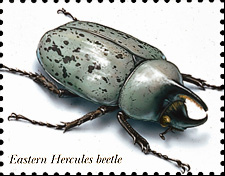 Hercbtlg hercules beetle sciox Images