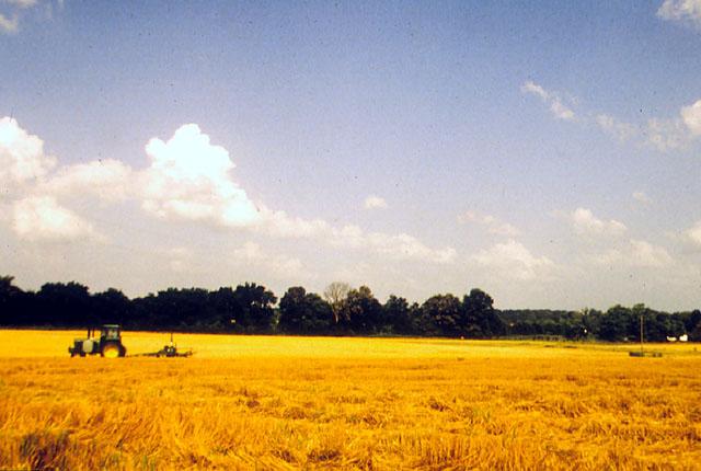Farmland1