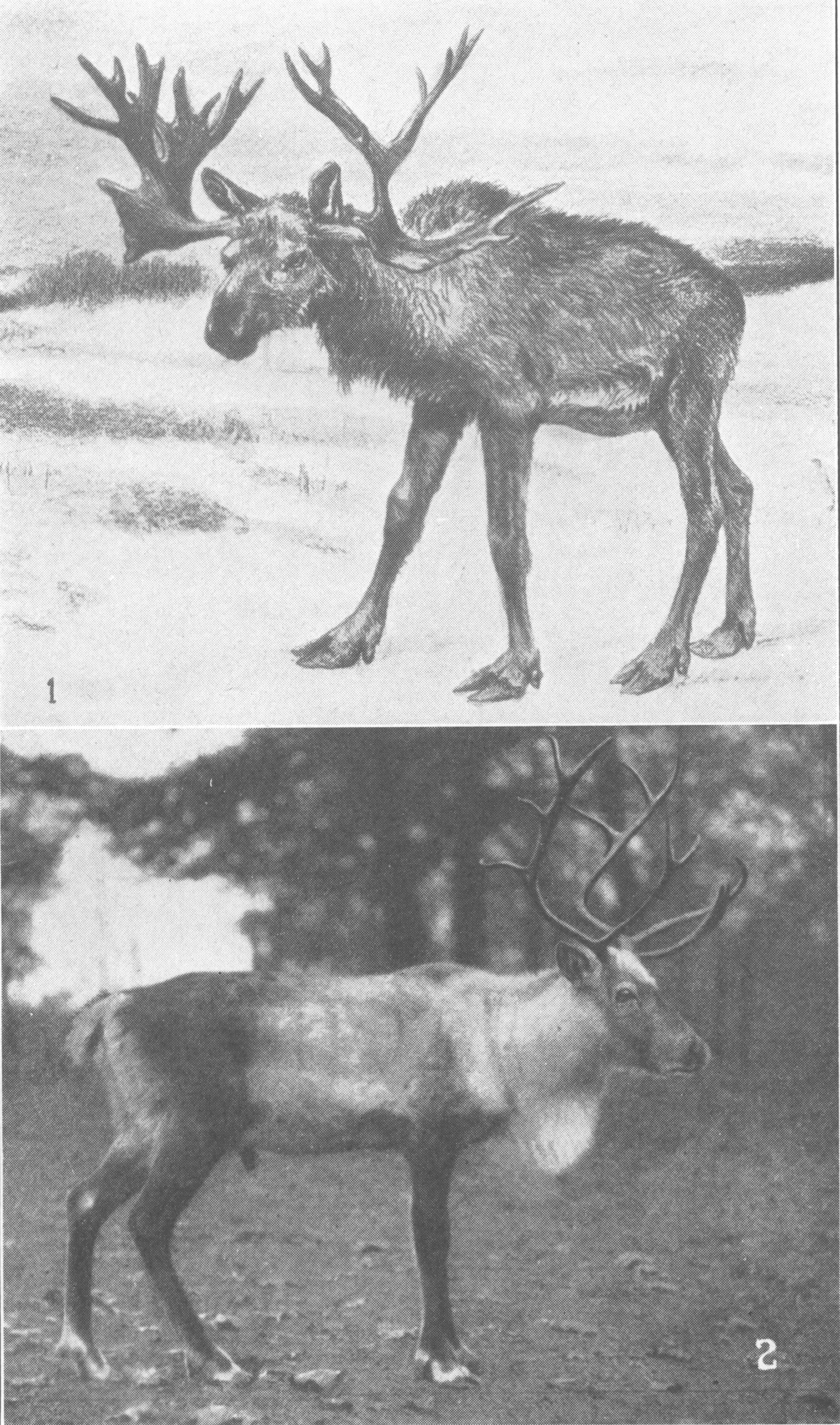 paleontology of kentucky by w r jillson 1931 chapter ten