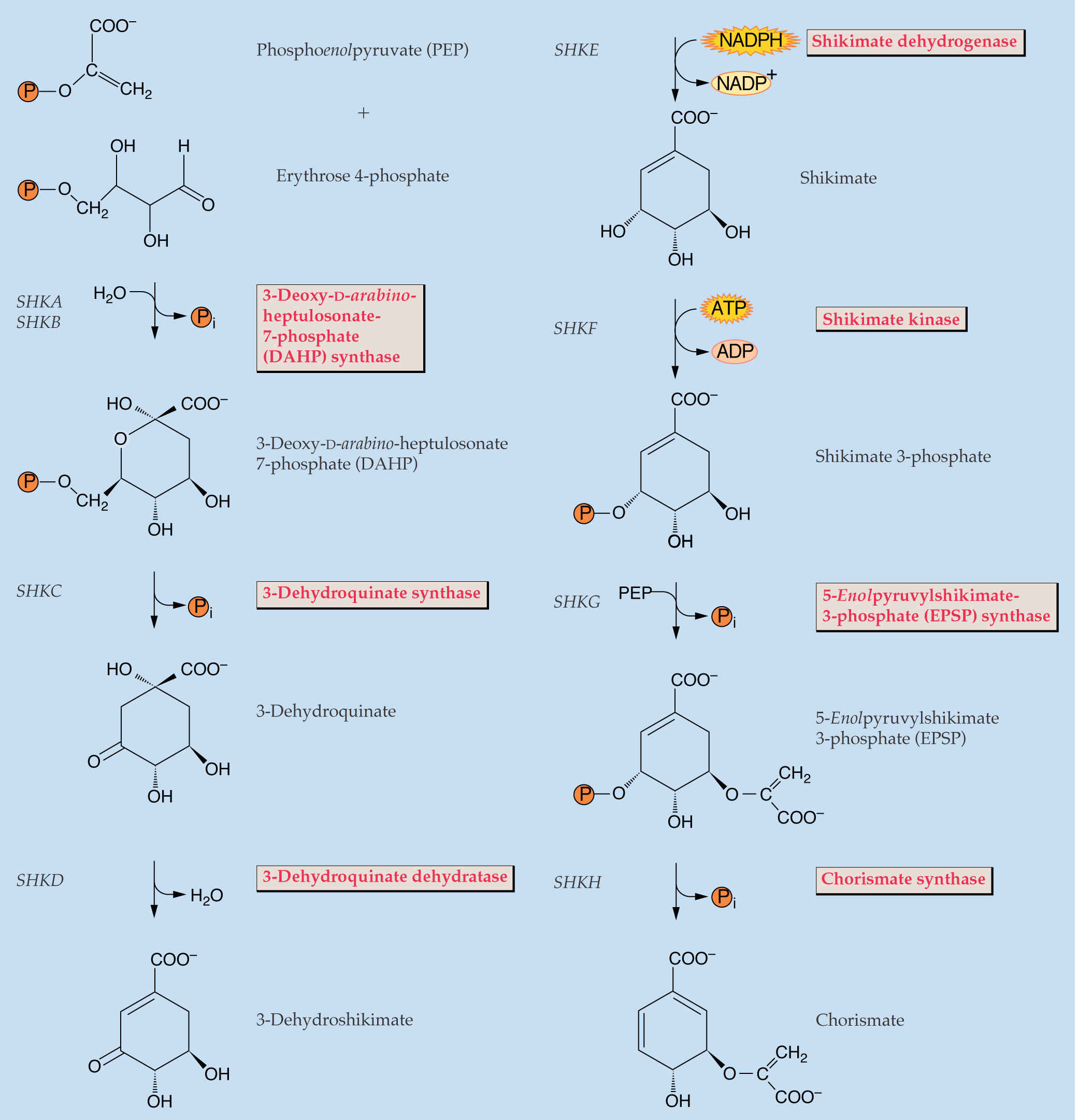biosynthesis of terpenoids and steroids