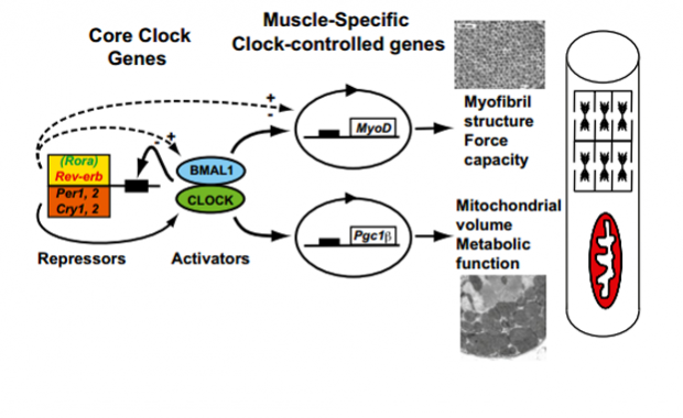 featured circadian xping