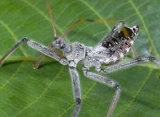 Assassin Bugs & Ambush Bugs of Kentucky - University of