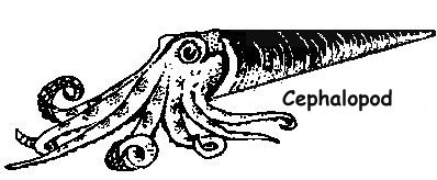 Ordovician Cephalopod