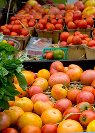 Tomatoes   Center for Crop Diversification