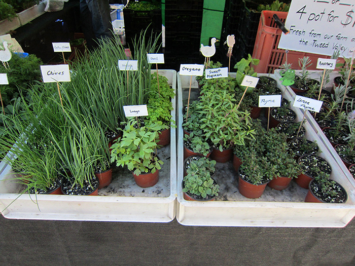herbs for sale at a farmers market