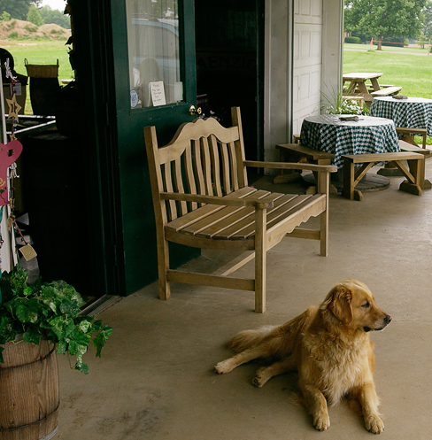 A dog lies on the porch of an agritourism food service enterprise