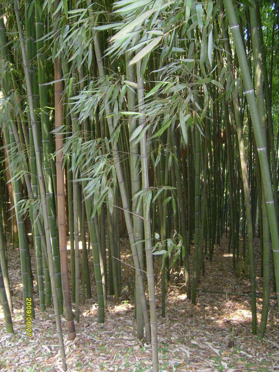Bamboo stand