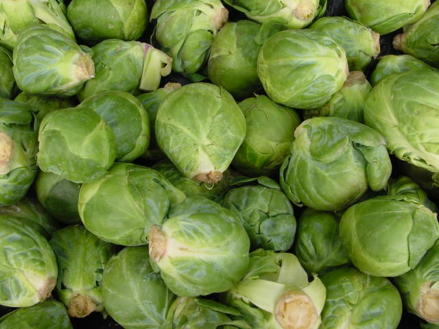 Harvested Brussels sprouts