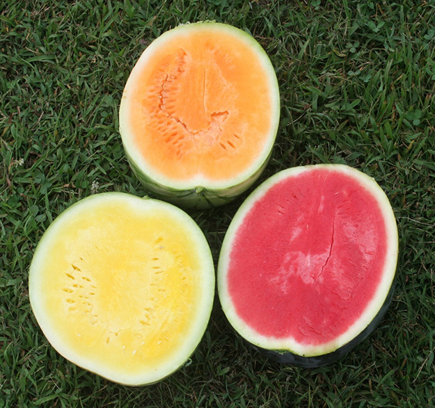 Watermelon of various flesh colors
