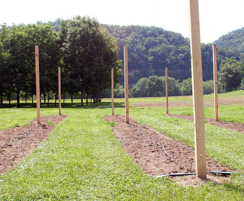 Hops planting at UK Robinson Center in Eastern Kentucky