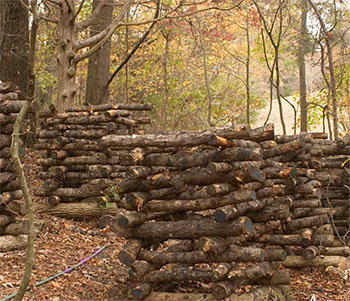 Shiitake log stacking method