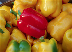 yellow and red harvested bell peppers