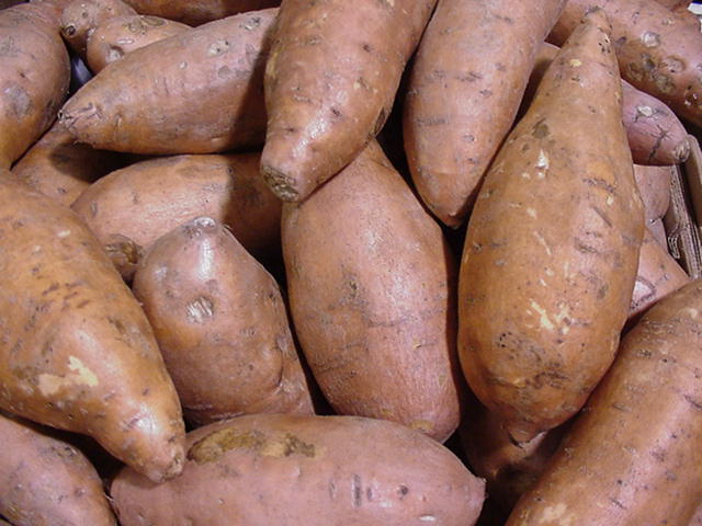 Harvested sweet potatoes