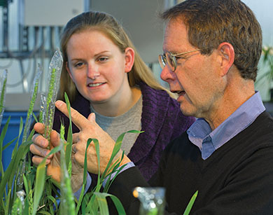 Plant and Soil Sciences professor Dave Van Sanford works with a graduate student