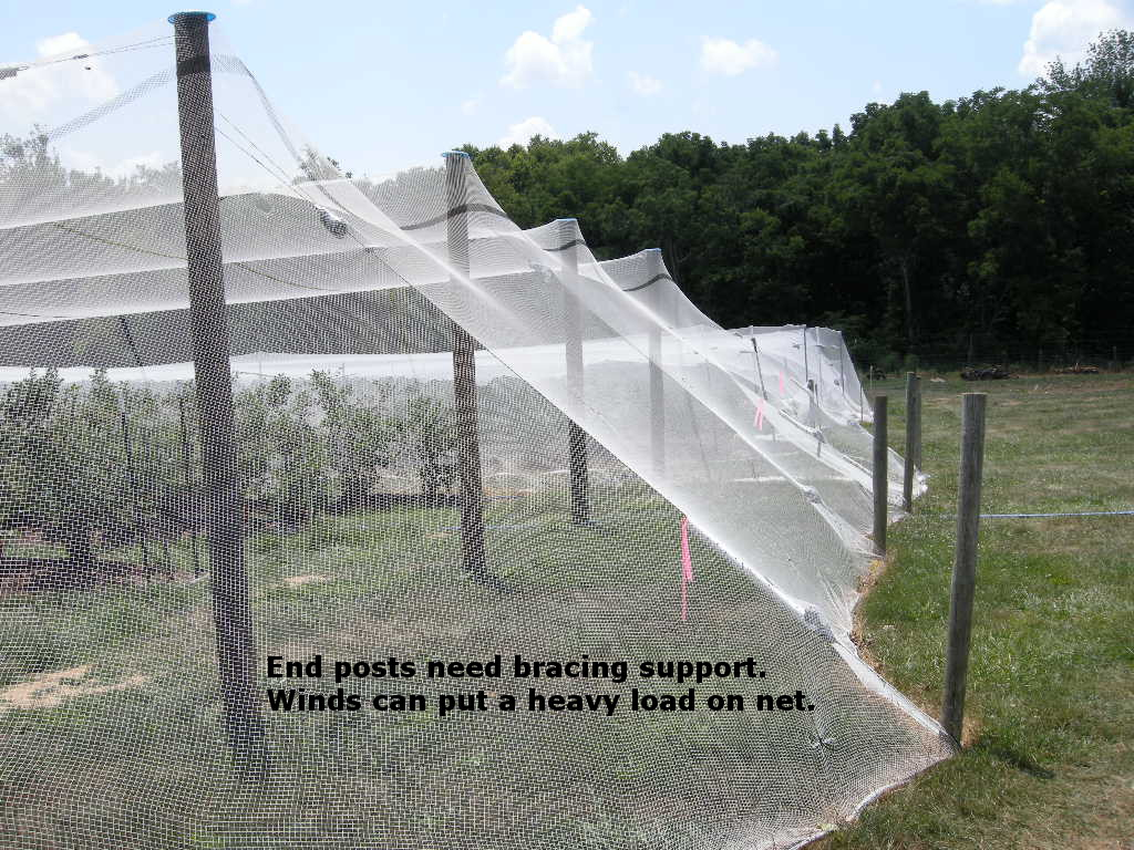 Bird Netting Pictures and Ideas for Bramble and Blueberry