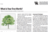 Front page of What is Your Tree Worth? publication