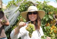 UK Grape Specialist Patsy Wilson