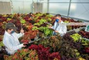 Project lead Ty Rich (left) and Paul Cockson record data in a coleus cultivar trial at the UK Horticultural Research Farm. Photo by Matt Barton.