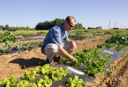 Mark Williams at the University of Kentucky Horticulture Research Farm