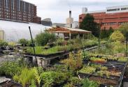UK native plant nursery