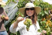 UK Viticulture Extension Specialist Patsy Wilson