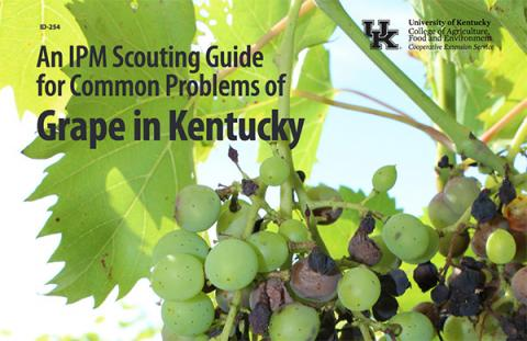 Cover page of ID-254, An IPM Scouting Guide for Common Problems of Grape in Kentucky