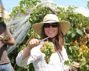 UK Grape Specialist Patsy Wilson
