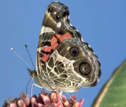 All about butterflies | Department of Horticulture