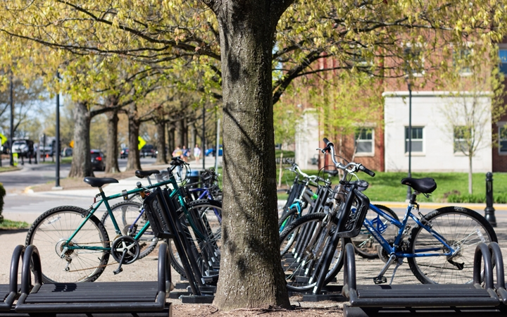 Many bicycles under tree