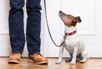 Resources for pet owners