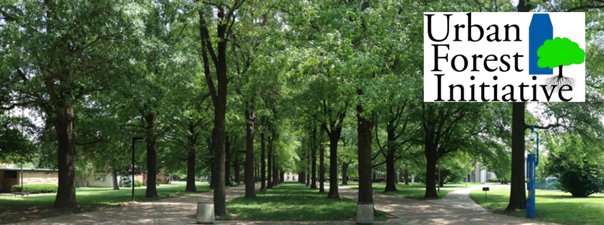 urban forests and open green spaces Annex a: definition of open space natural and semi-natural urban green spaces – including woodlands, urban forestry, grasslands (eg meadows).